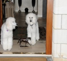 Stella and Violet Moss…approving my Zenyatta statue! Photo by John Shirreffs