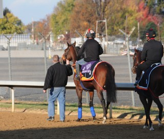 The European Horses go to the track together at a special time each morning while at THE DOWNS. Photo by John Shirreffs
