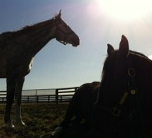 Tasty and I....relaxing in the sun! Photo by Sarah Campion