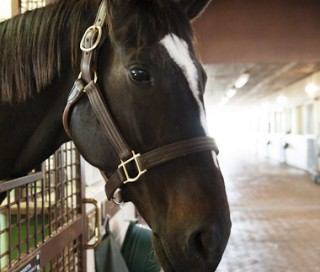 Zenyatta in her stall. Photo by Kyle Acebo.