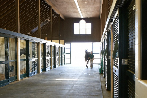 Heading back to her stall in the foaling barn. Photo by Kyle Acebo