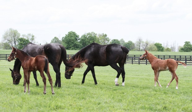 New paddock mates! Photo by Alys Emson/Lane's End