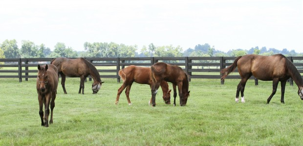 Zenyatta, 13Z and paddock mates. Photo by Alys Emson.