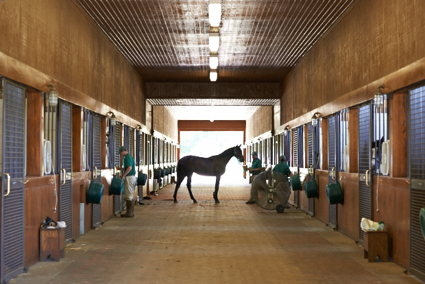 Cozmic One in the yearling barn. Photo by Kyle Acebo