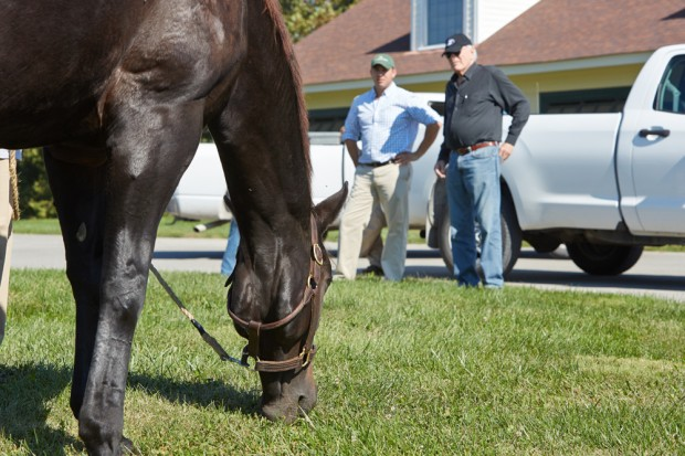 Zenyatta grazes as Jerry looks on. Photo by Tyler Matson