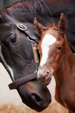 Zenyatta and Tapit colt. Photo by Kyle Acebo