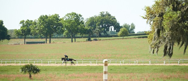 Cozmic One on the track at Mayberry Farm. Photo by Kyle Acebo.