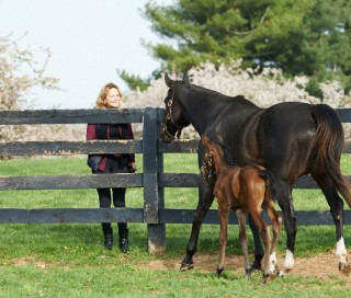 Zenyatta and her filly greet Ann at the fence. Photo by Kyle Acebo.