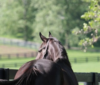 Zenyatta. Photo by Alys Emson,