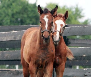 14Z, left, and her her best bud. Photo by Alys Emson/Lane's End.