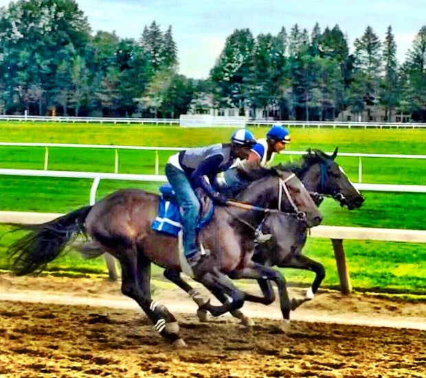 Coz in training at Saratoga.