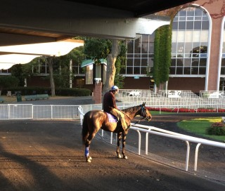 Coz stands in the paddock at Belmont. Photo by John Shirreffs