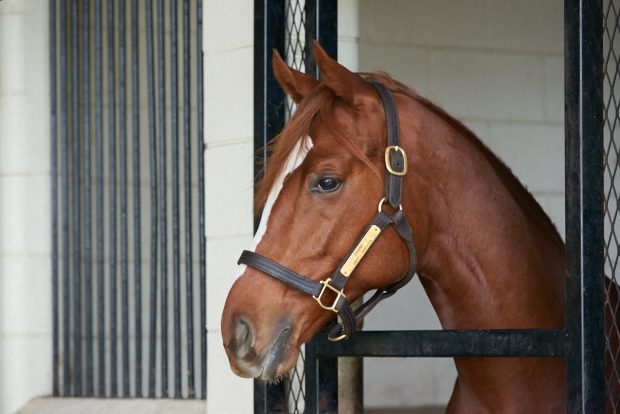 Ziconic in his stall.
