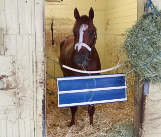 Ziconic in his stall in John's barn at Belmont.