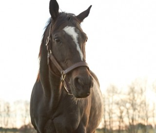 Zenyatta on her 11th birthday. Photo by Kyle Acebo.