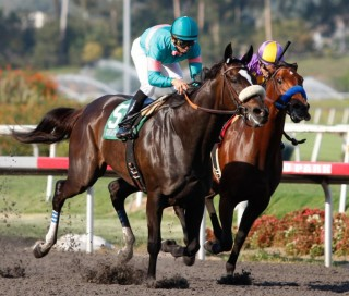 Zenyatta won the Lady's Secret Stakes on October 2, 2010. Photo courtesy of AP - by Jason Redmond.