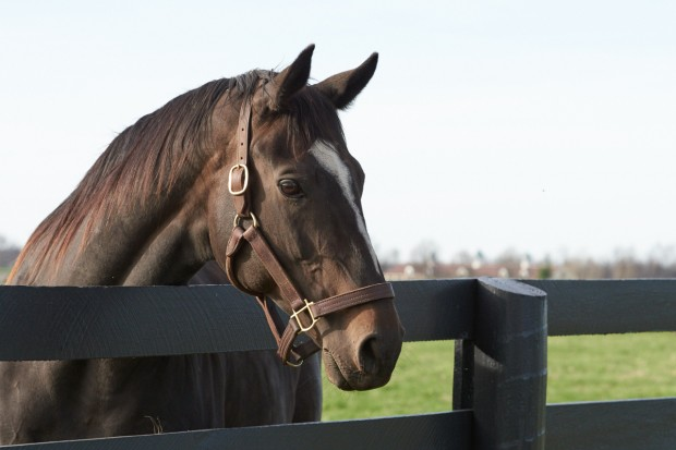 Zenyatta can't wait to meet you! Photo by Kyle Acebo