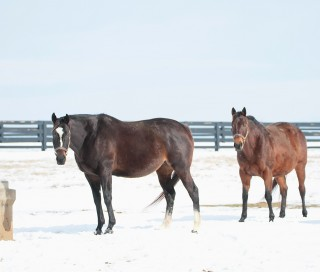 Zenyatta with a paddock mate. Photo by Alys Emson.