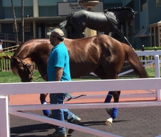 Ziconic schooling this morning at Santa Anita with  Mario, his mom's statue in the background. Photo by Dottie Ingordo-Shirreffs.