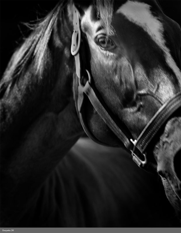 A portrait of Zenyatta by Neil Latham.
