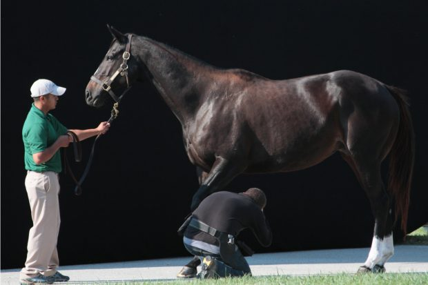 Neil Latham photographs Zenyatta at Lane's End Farm.