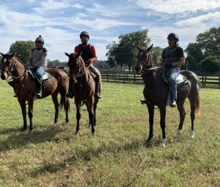 Zenyatta's filly, right, on the first day riding in the field. Photo by April Mayberry.