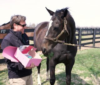 Zenyatta's 15th birthday. Photo courtesy of Alys Emson/Lane's End Farm.